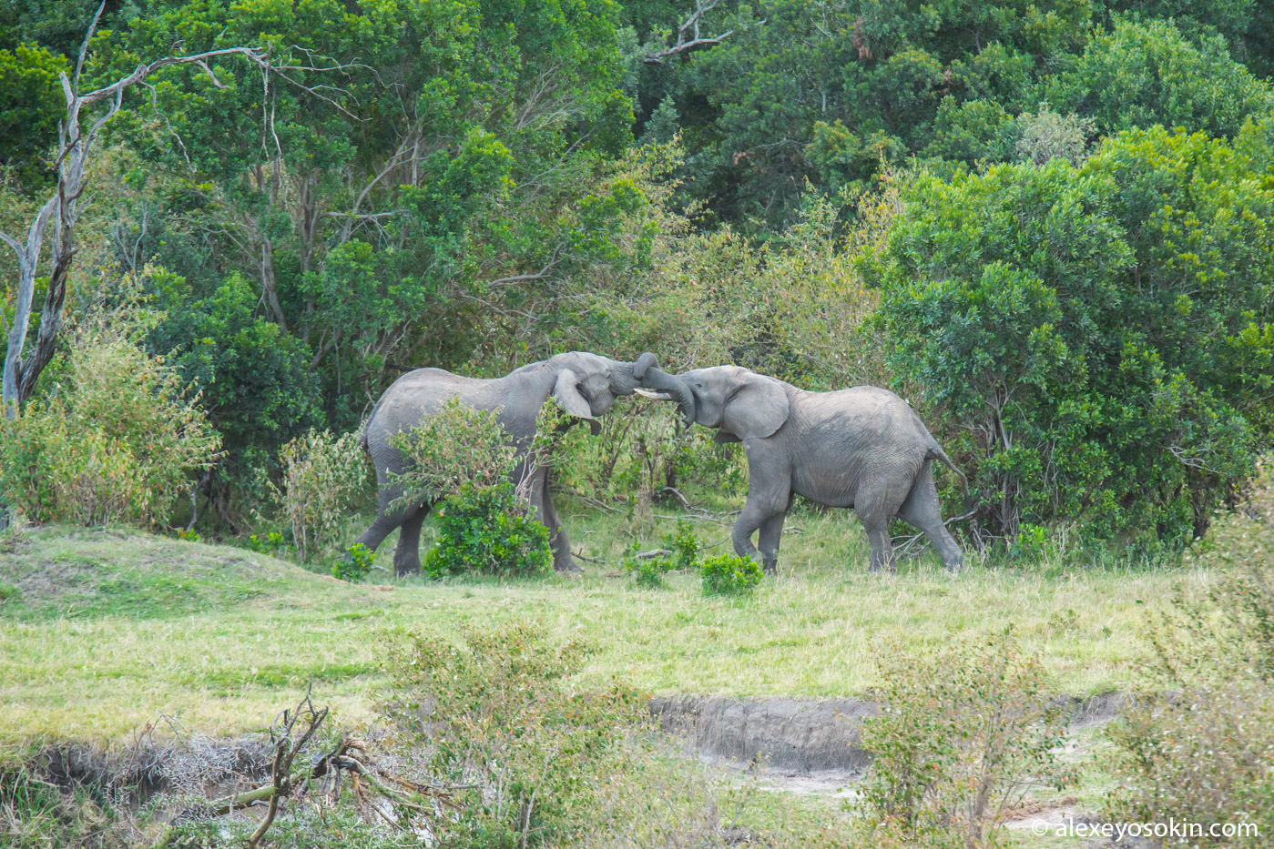 How two elephants measured their trunks ... PELICAN, elephants, PENTAX, let, when, all the same, age, guarantee, cases, family, after, only, quickly, roads, Photo equipment, ATTENTION, more, saw, swinging, nature