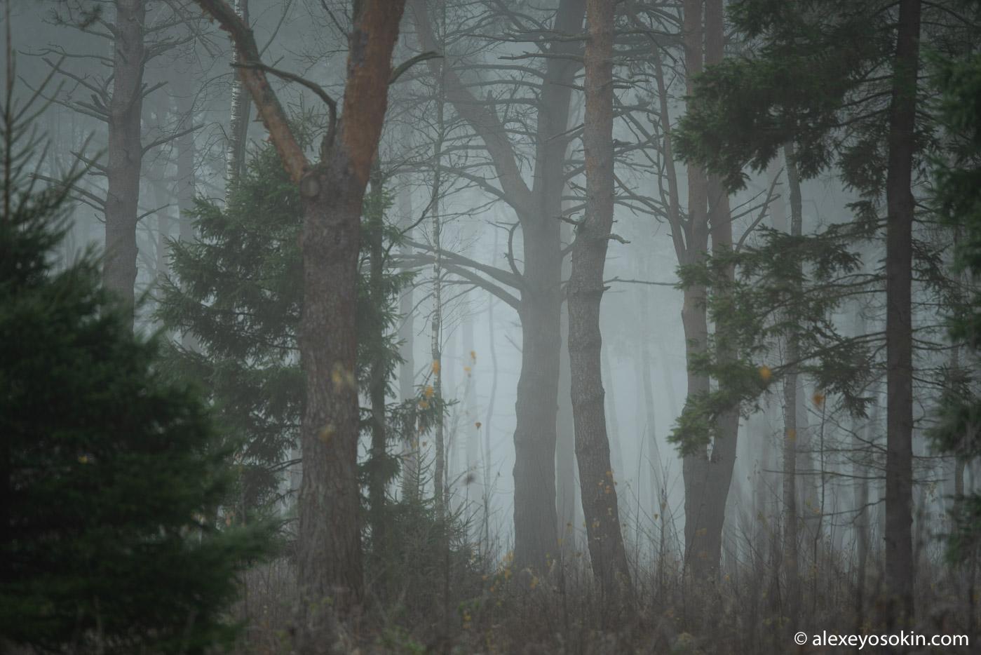 Волшебство подмосковного леса...