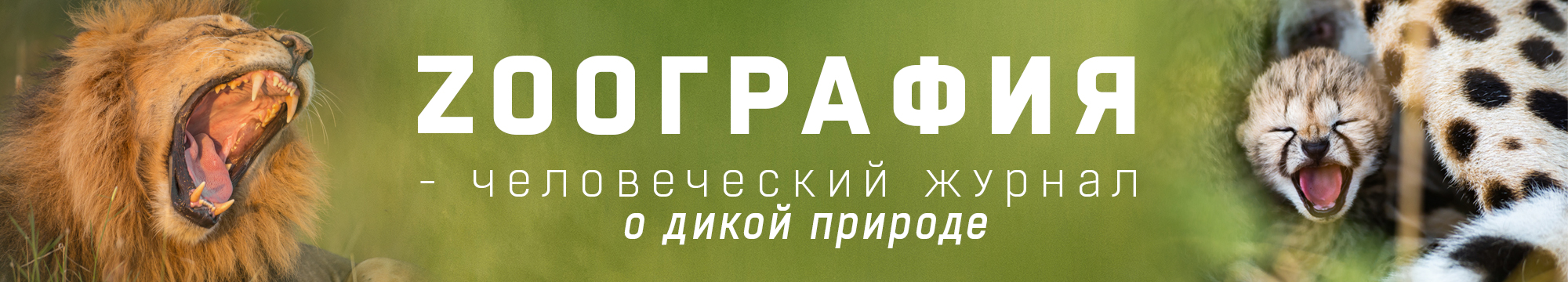 Переехал в Санкт-Петербург...
