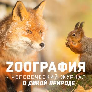 zoographia