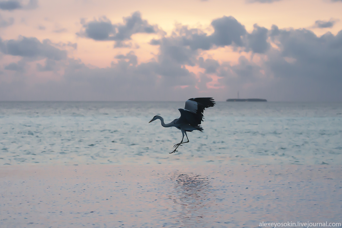 Maldives_dance_lj