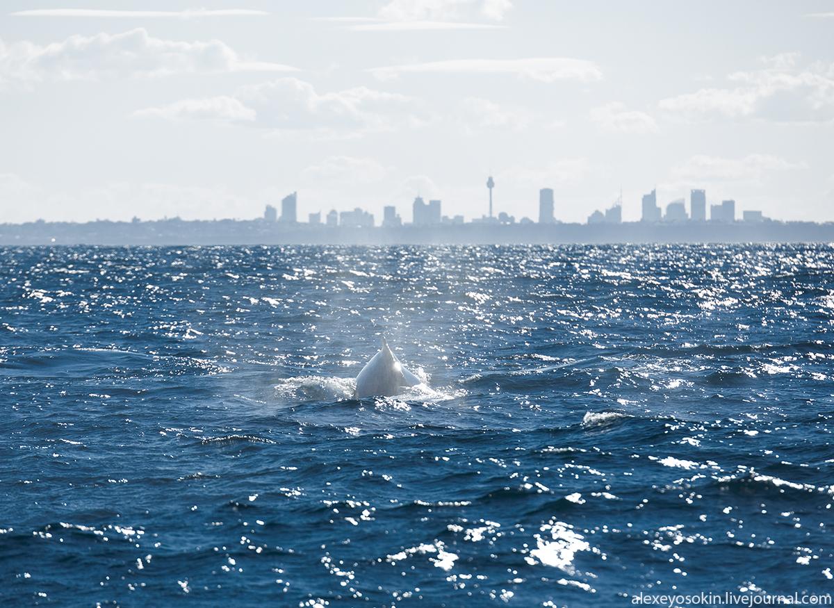 Sydney_13_lj