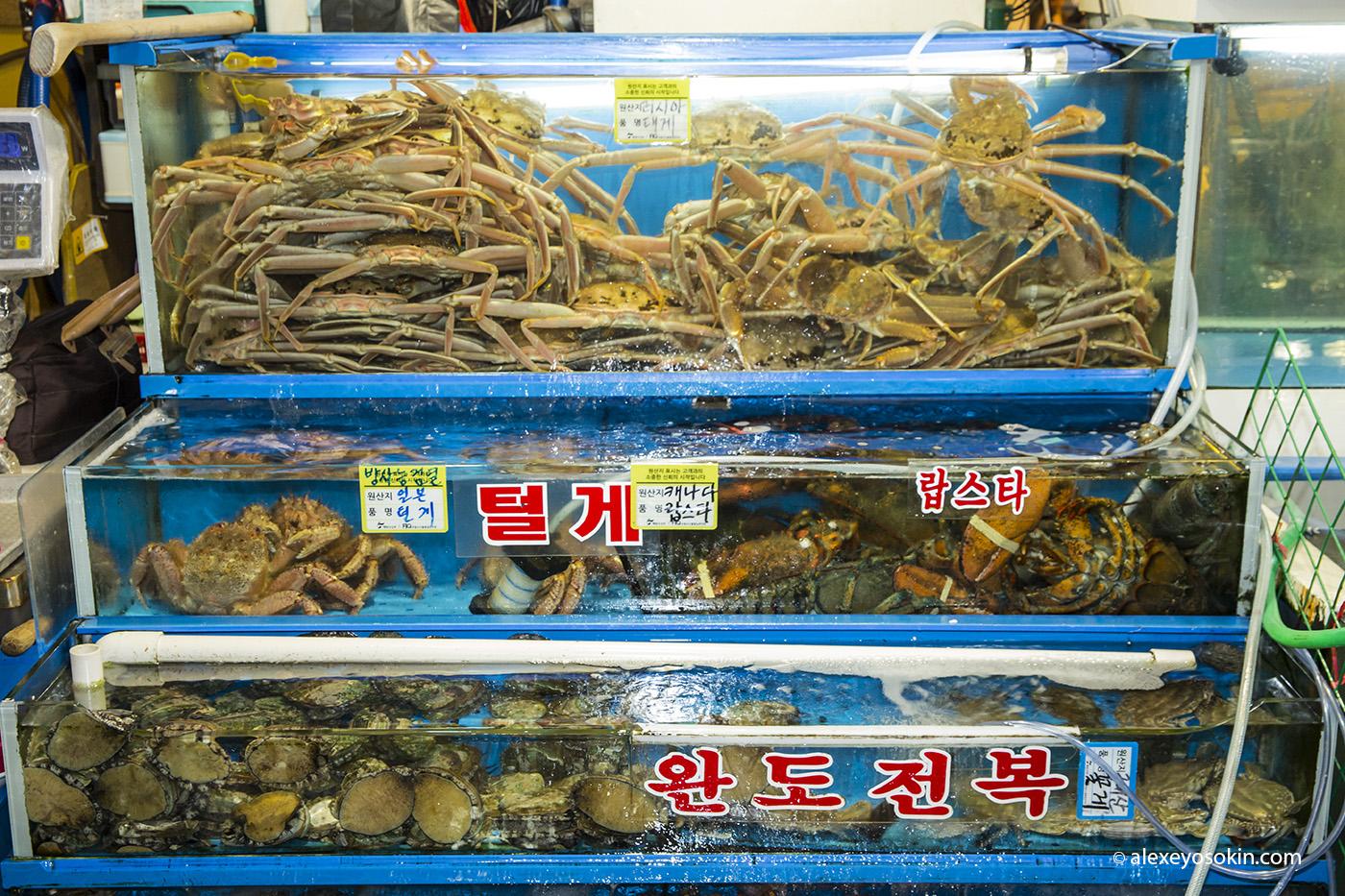 seoul_fish_market_6_ao