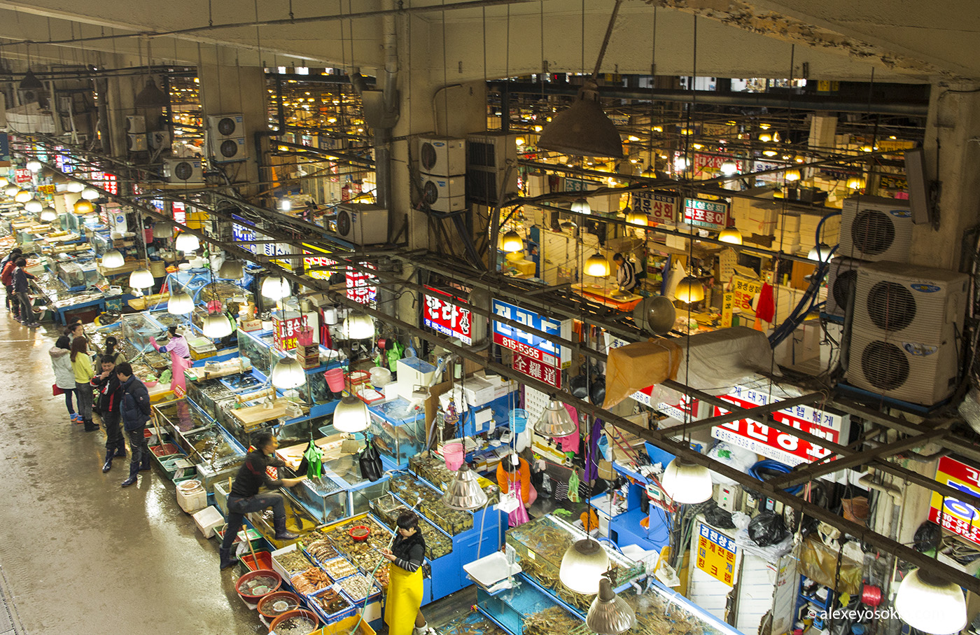 seoul_fish_market_15_ao
