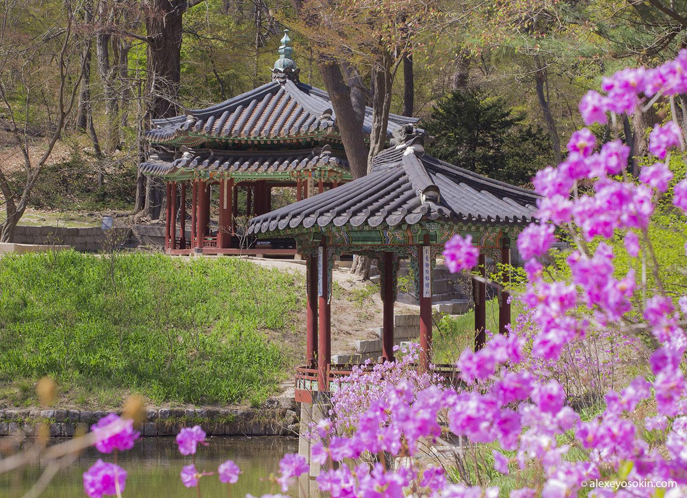 secret_garden_0_ao