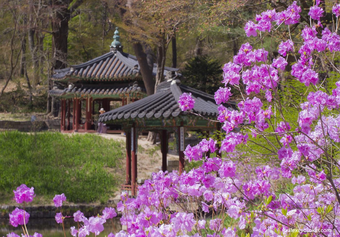 secret_garden_7_ao