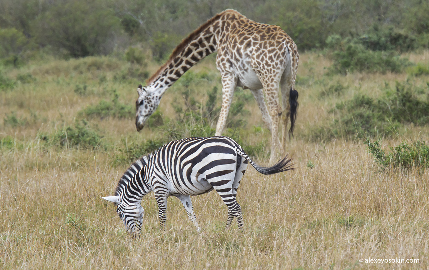 lunch_in_africa_1_ao