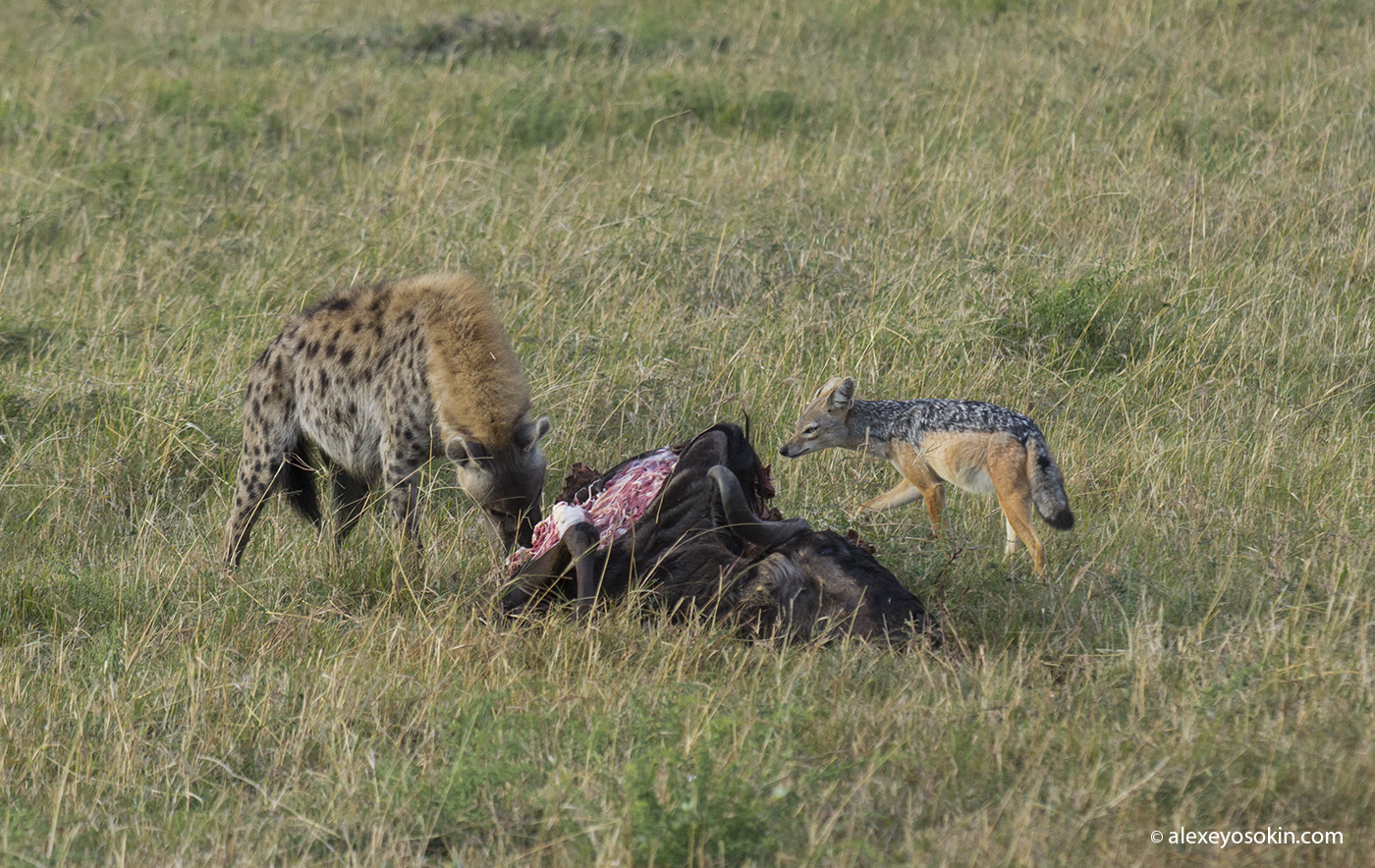 lunch_in_africa_5_ao
