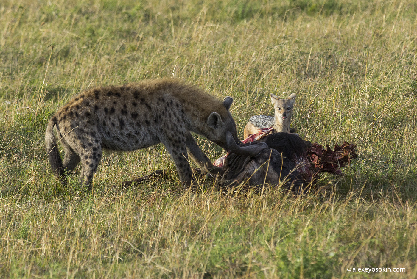 lunch_in_africa_6_ao