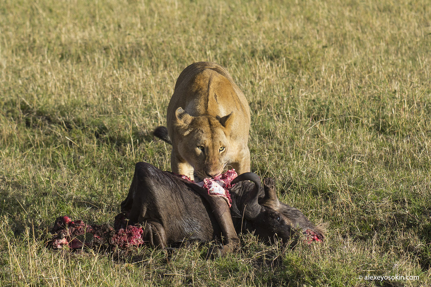 lunch_in_africa_7_ao