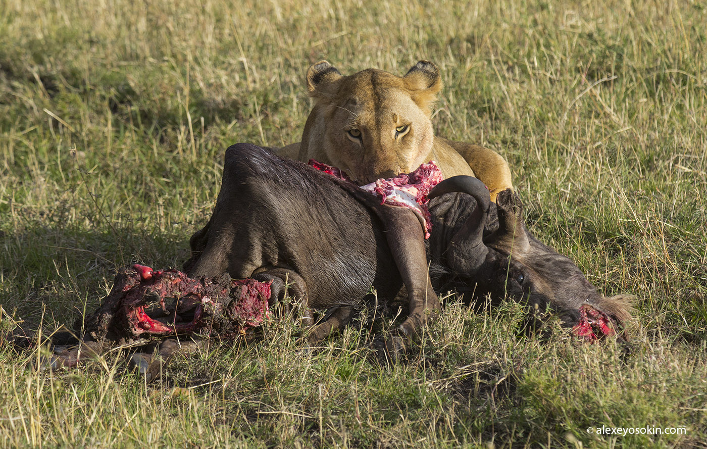 lunch_in_africa_8_ao