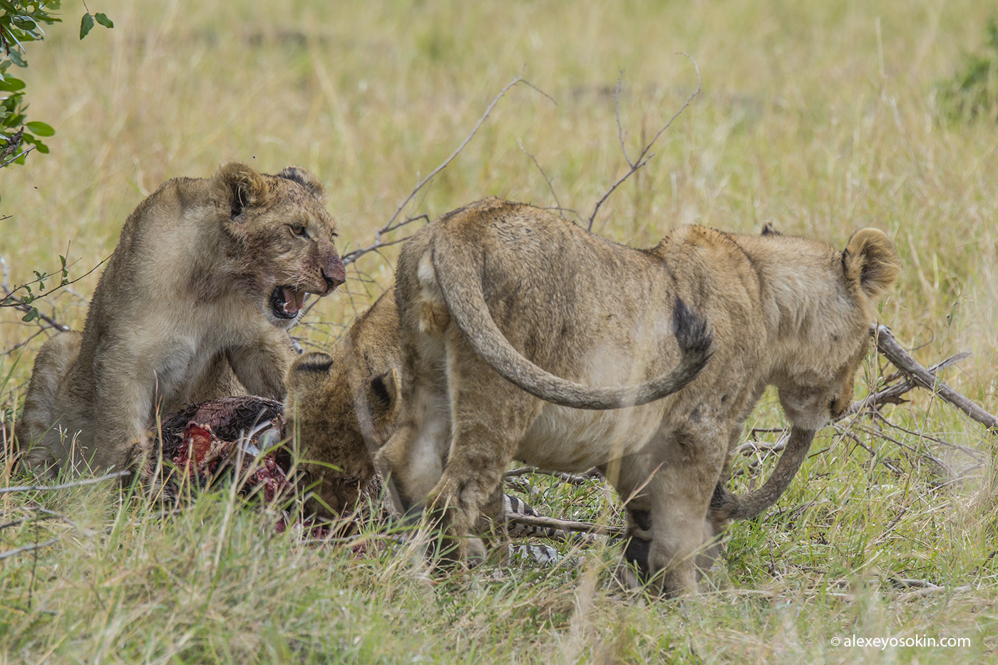 lunch_in_africa_9_ao