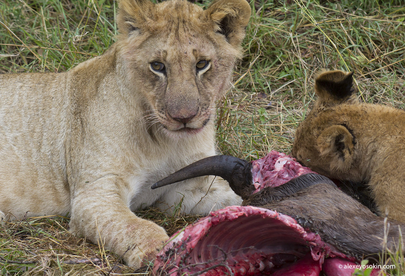 lunch_in_africa_10_ao