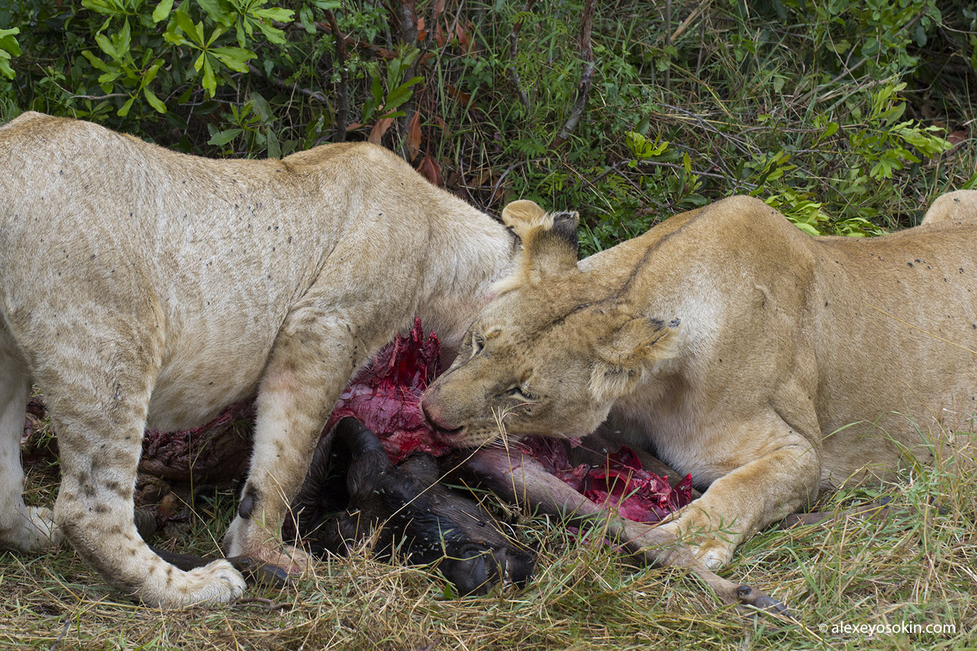 lunch_in_africa_14_ao