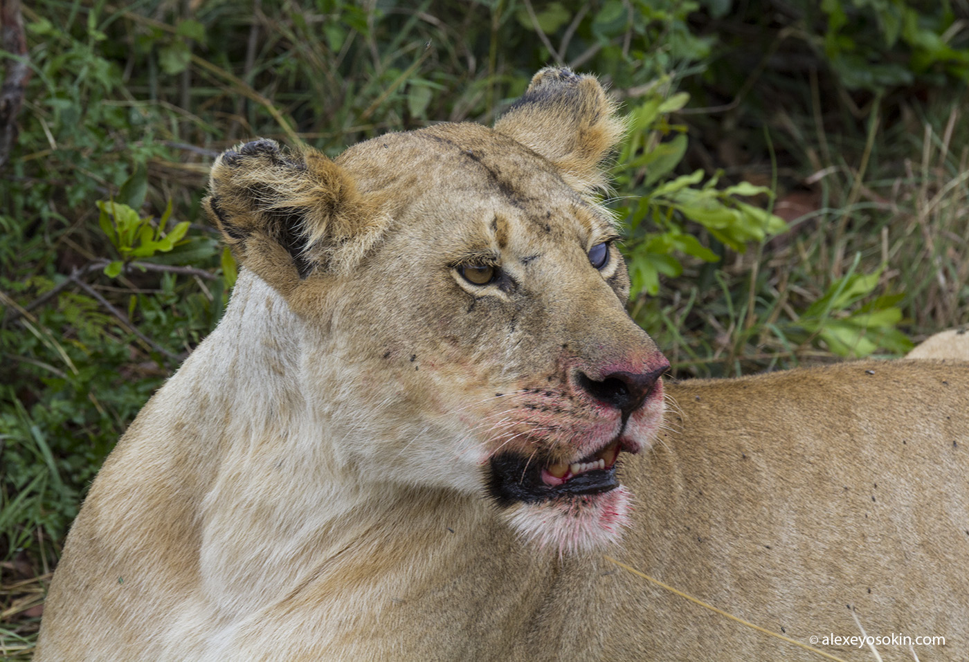 lunch_in_africa_15_ao