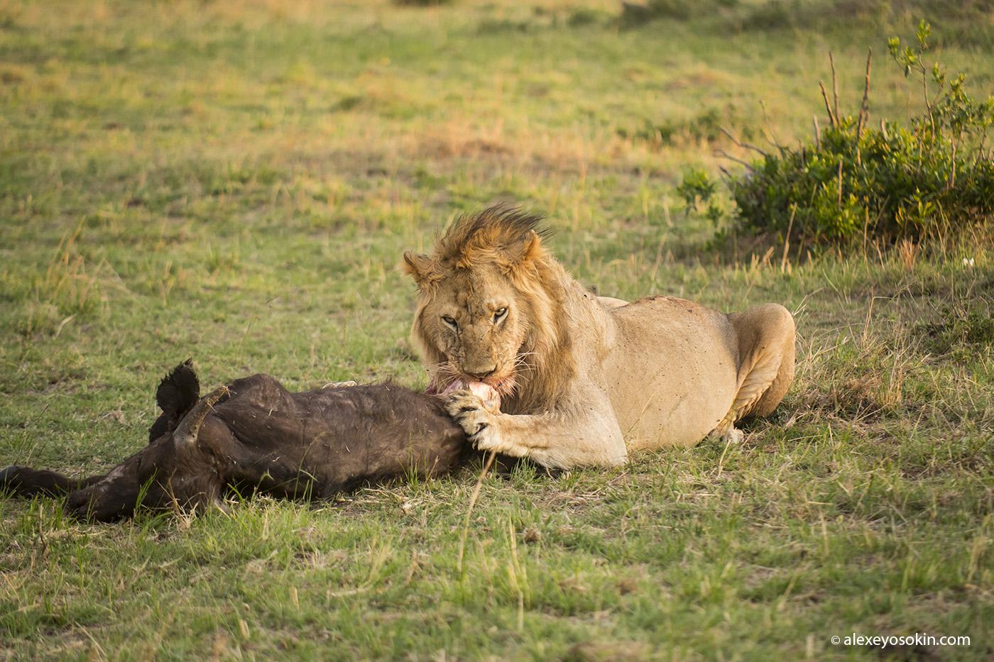 lions_brunch_02_ ao