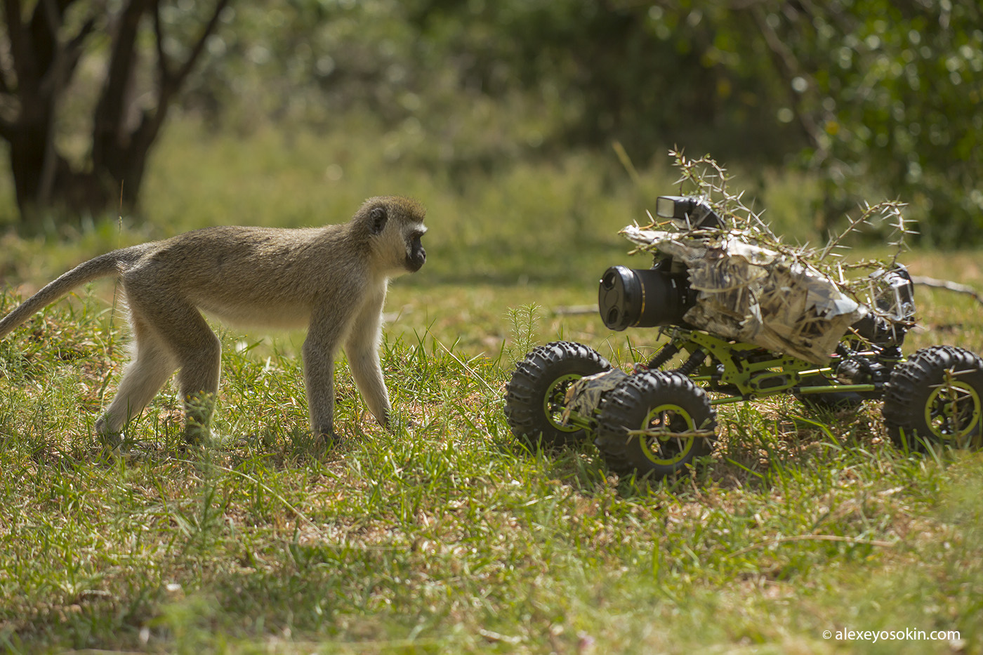 Шпионы-натуралисты Monkey+truck_ao