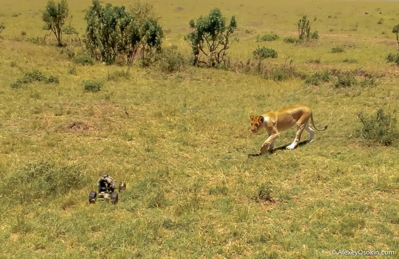 lions+canon1