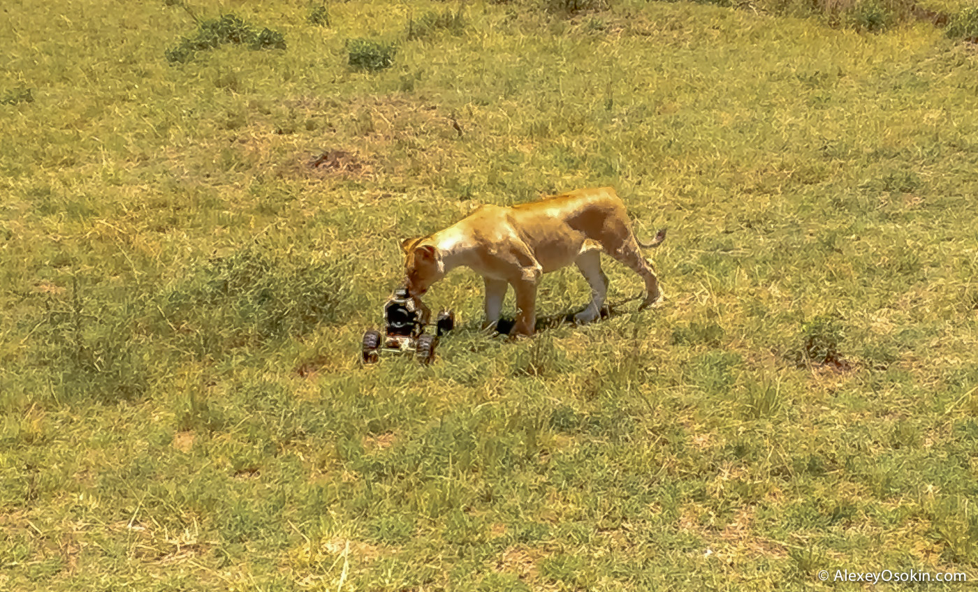 lions+canon2