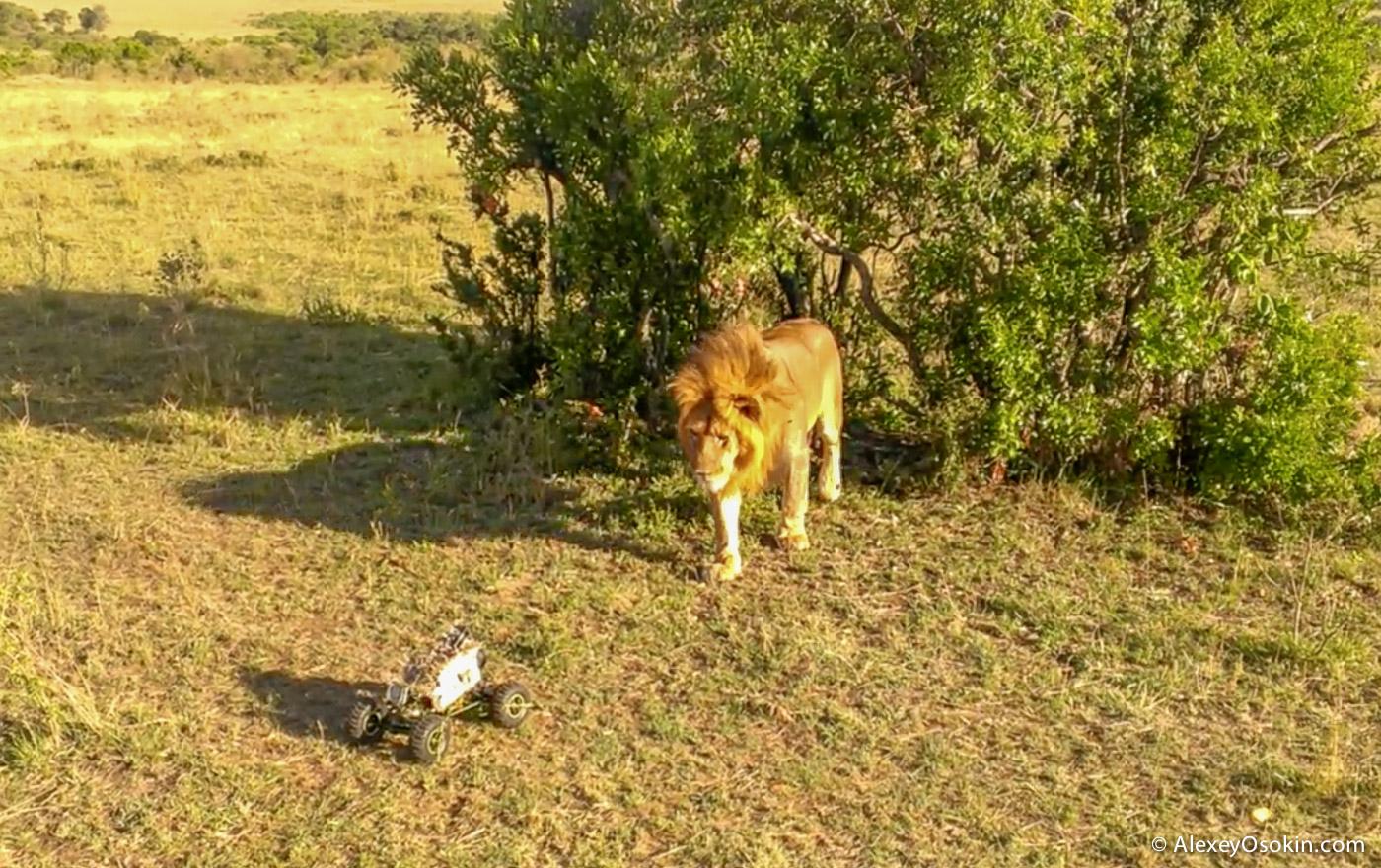 lions+canon11