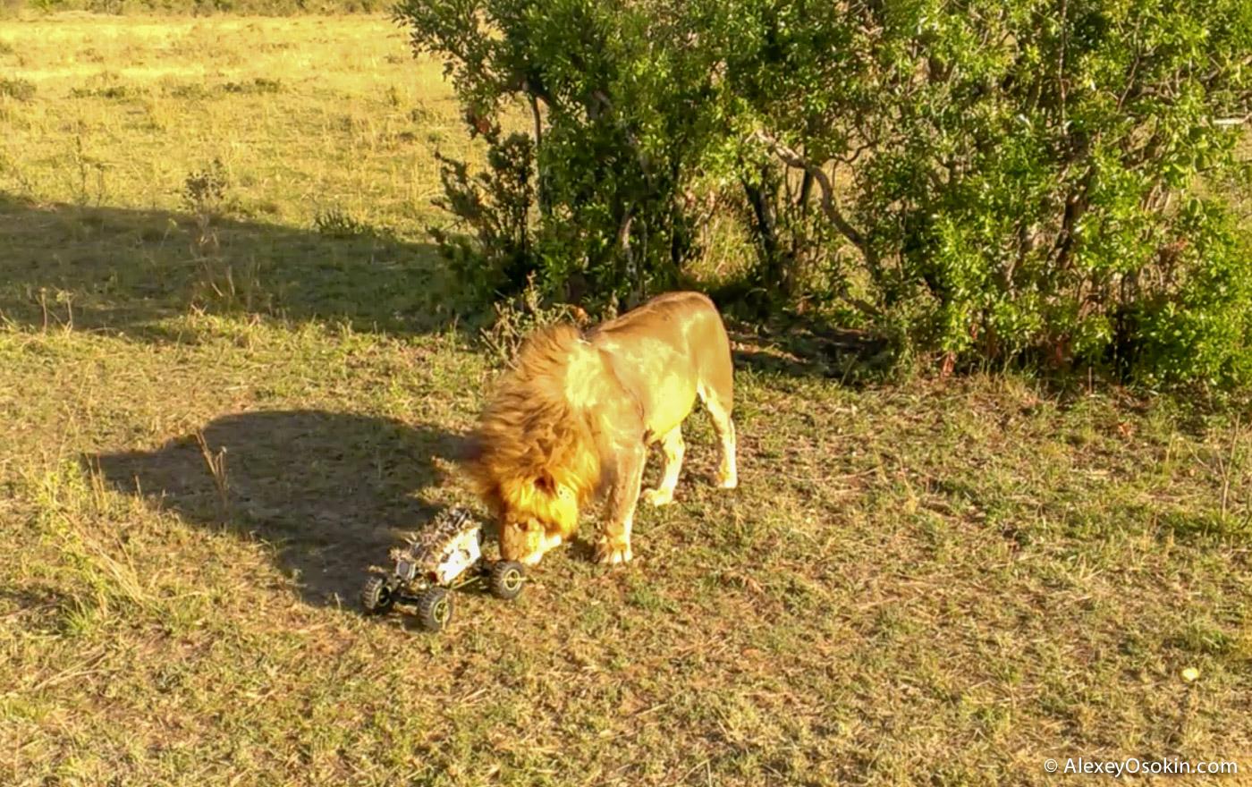 lions+canon12