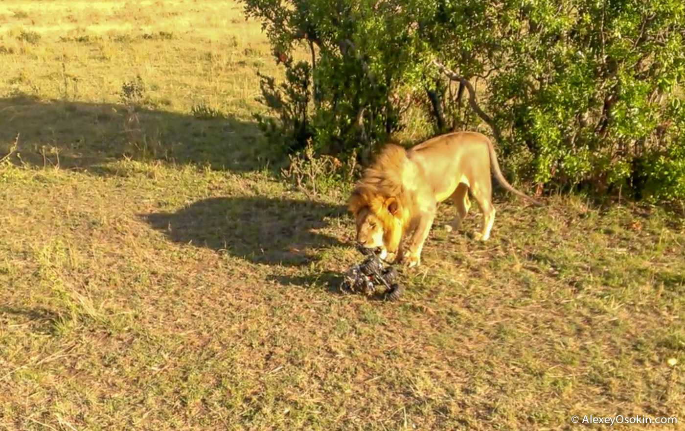 Шпионы-натуралисты lions+canon15
