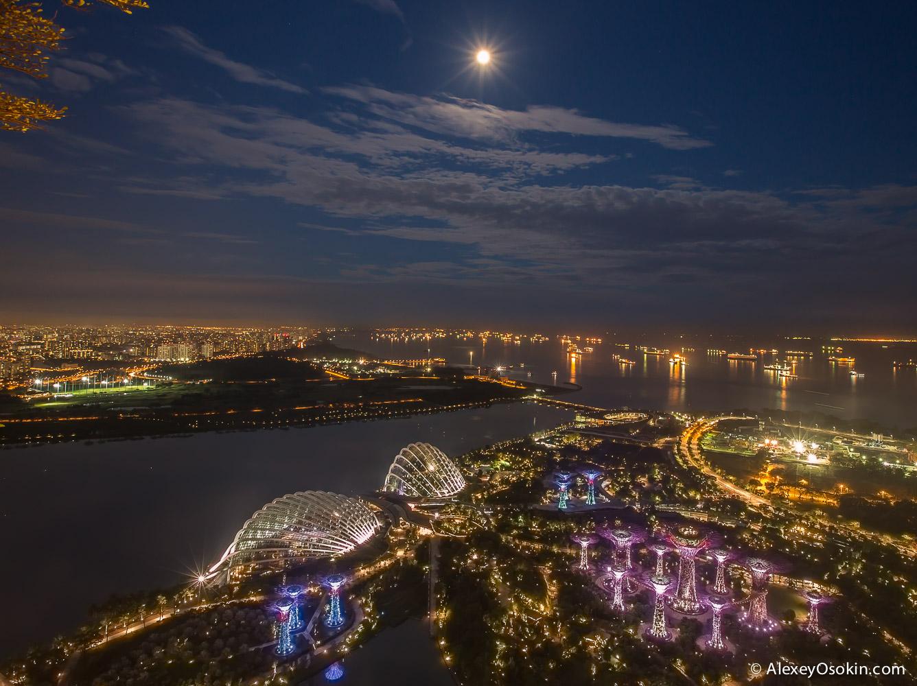 singapore2015_-4.jpg
