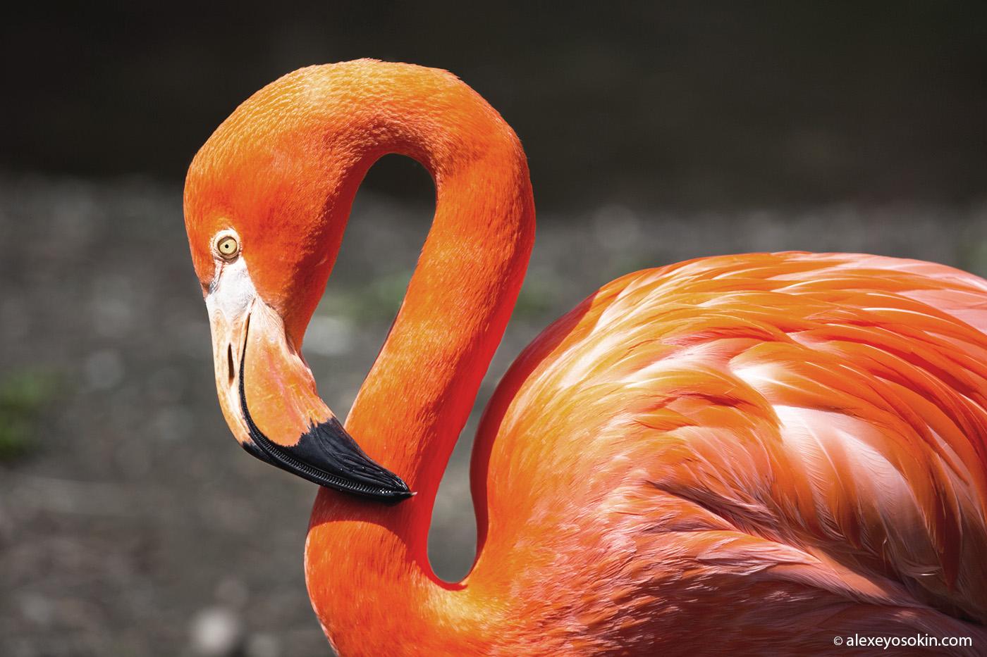 flamingo_10_lj.jpg