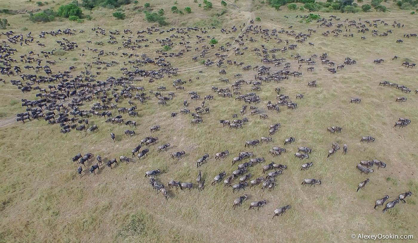kenya-migration-ao, aug.2015-7.jpg