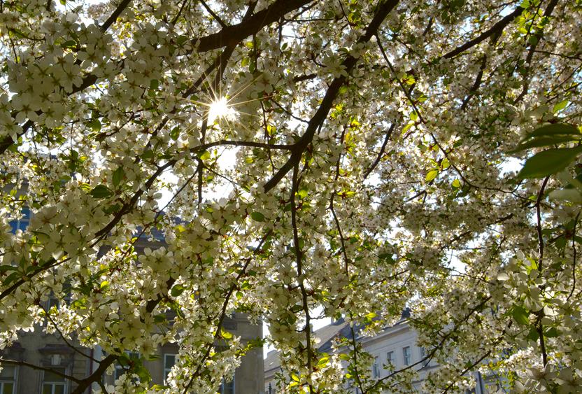 Весна в Праге_2