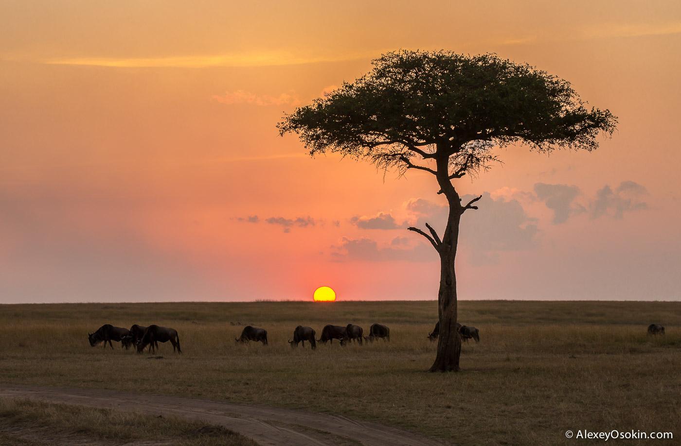 kenya-cheetah2-ao, aug.2015-20.jpg