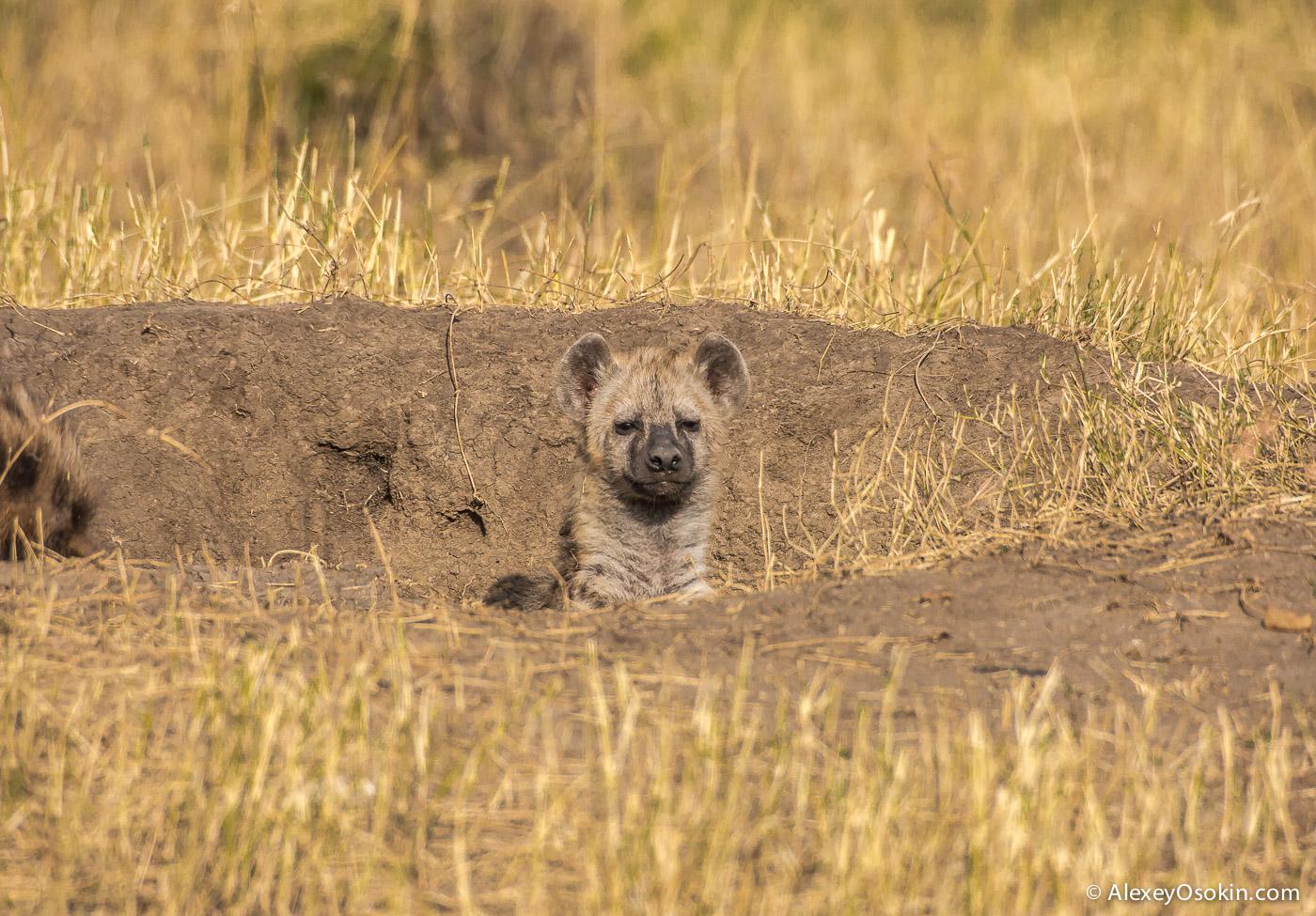 kenya-hayana-cubs-ao, aug.2015-9.jpg