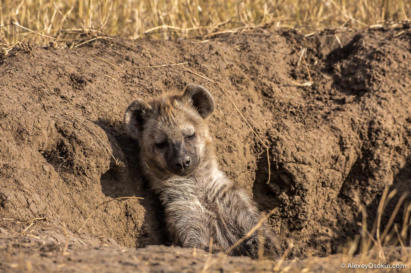 kenya-hayana-cubs-ao, aug.2015-10.jpg
