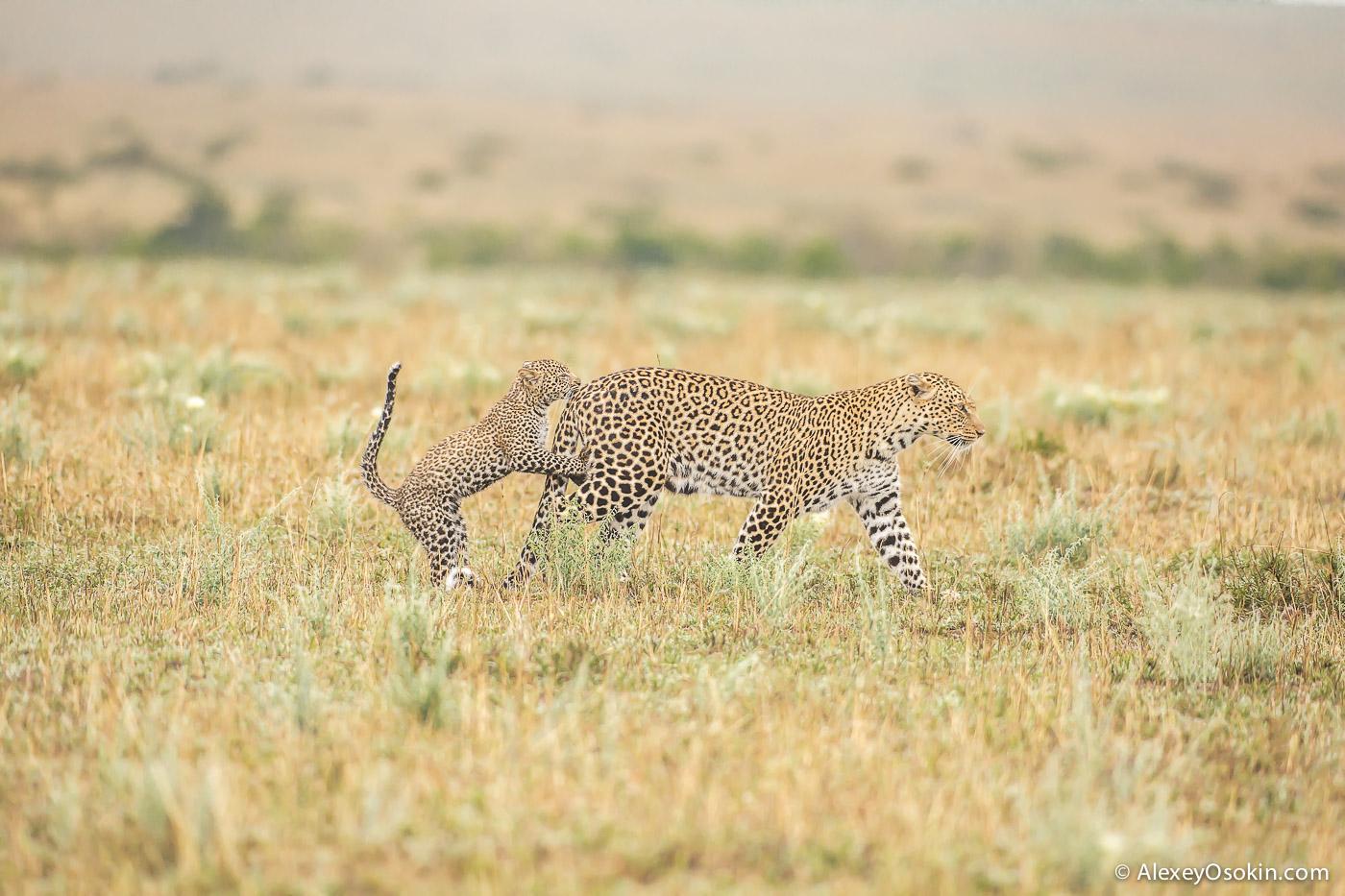 Leopard_lerean_poly_ao. oct.2015-38.jpg