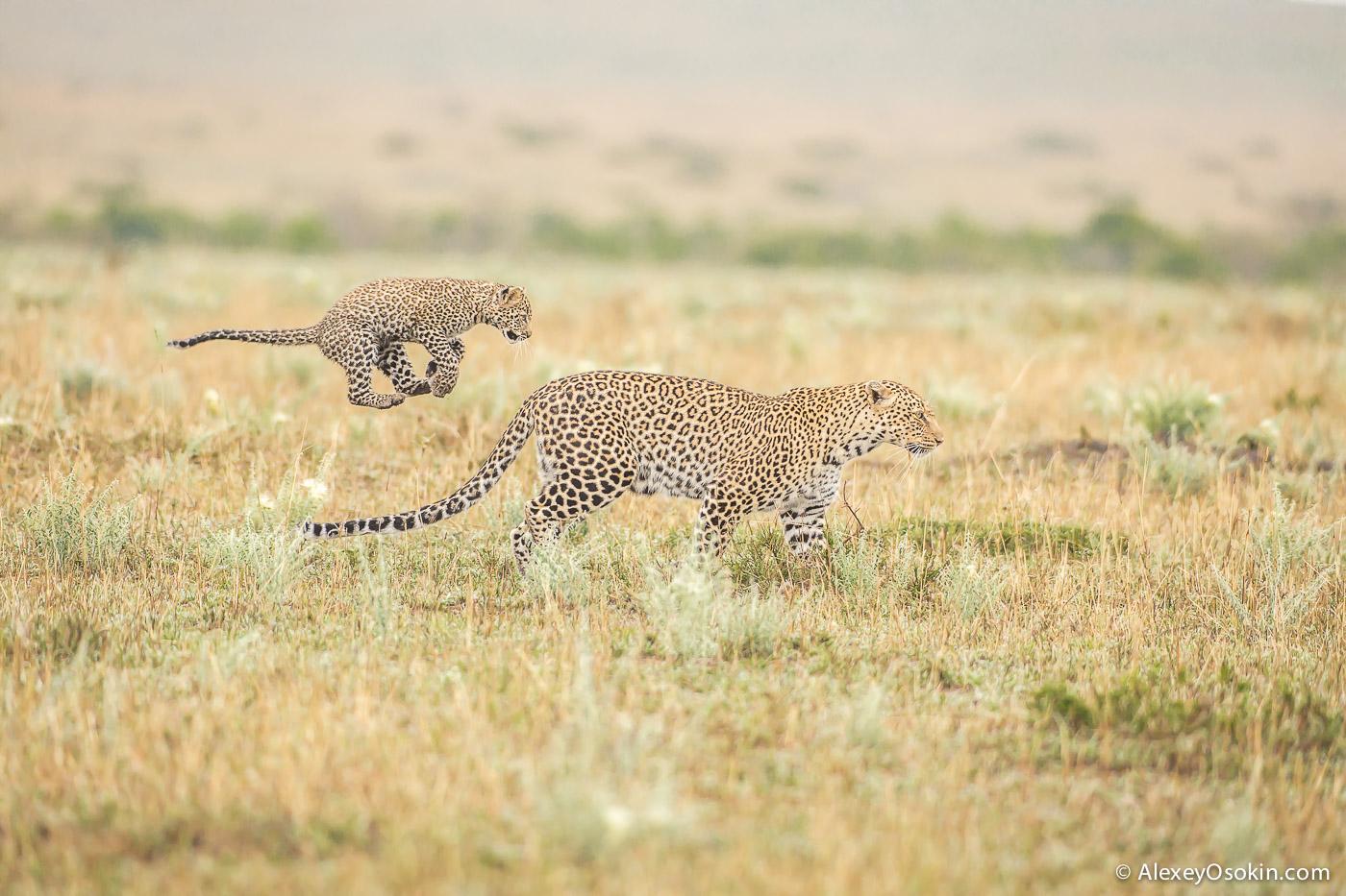 Leopard_lerean_poly_ao. oct.2015-40.jpg