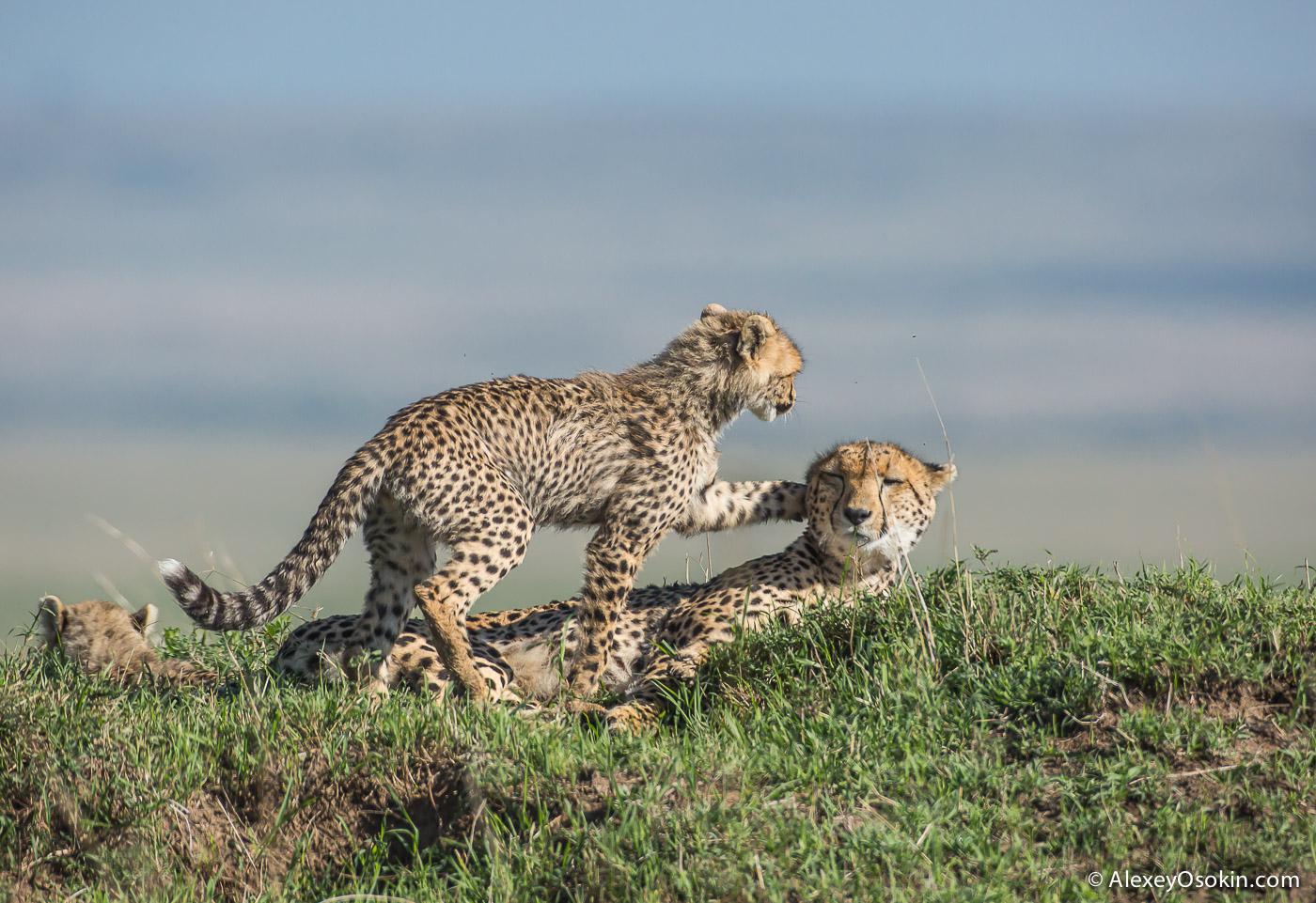 Kenya_Imani_ao-4.jpg
