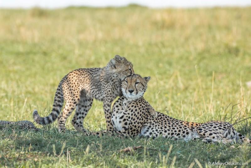 Женщины России и самки диких животных Африки, что общего? Kenya_Imani_ao-11.jpg