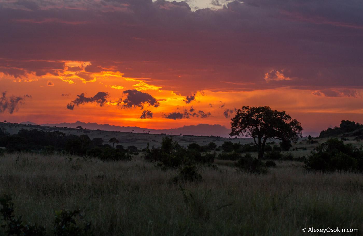 african_sky_ao-5.jpg