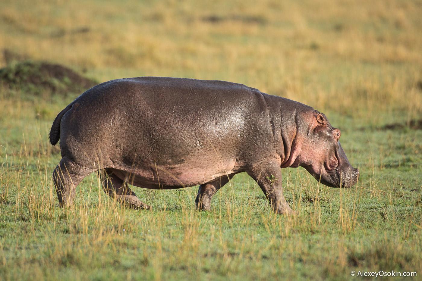 Самые опасные для человека животные Африки