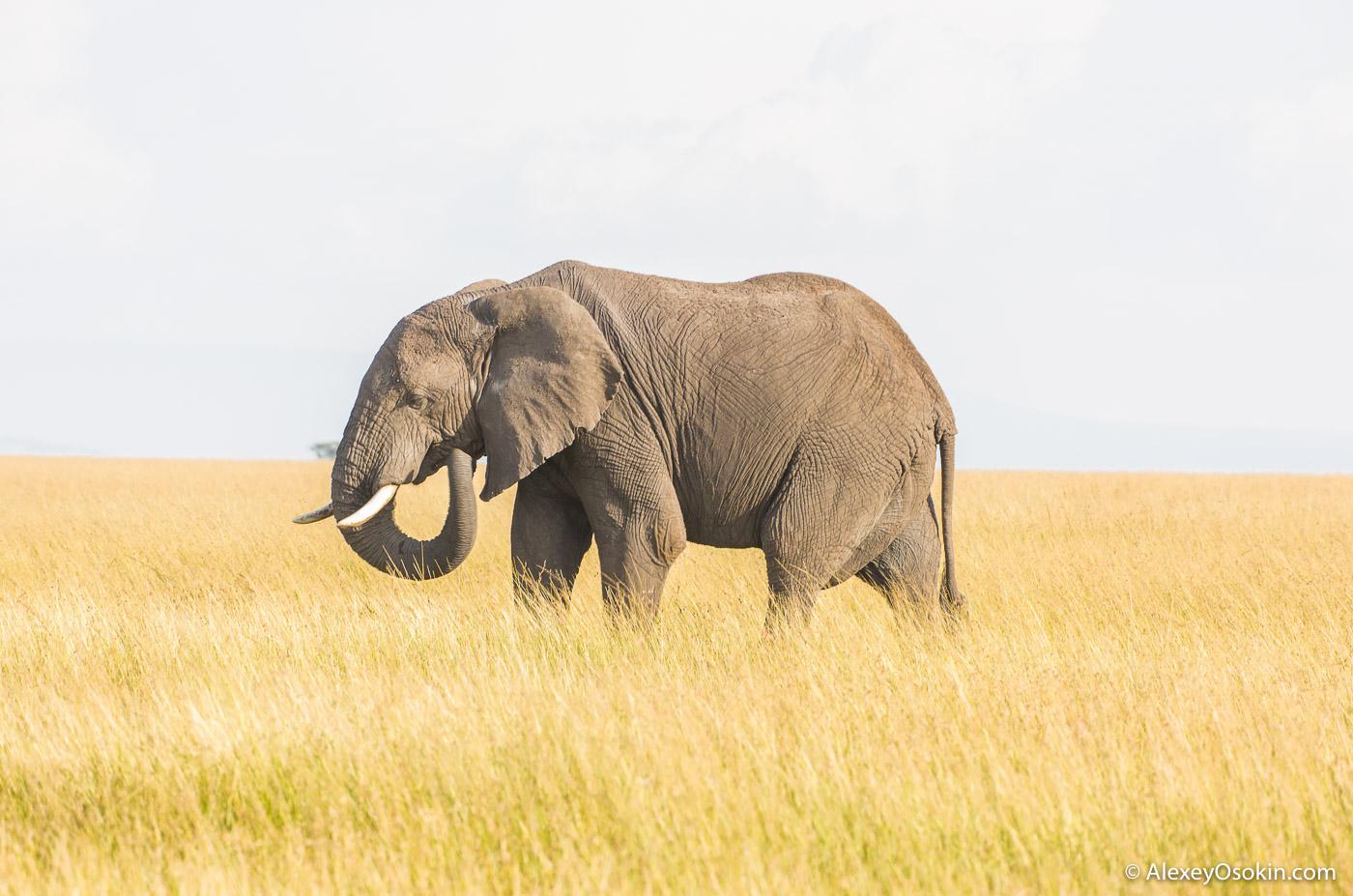 kenya_animals_ao_3-10.jpg