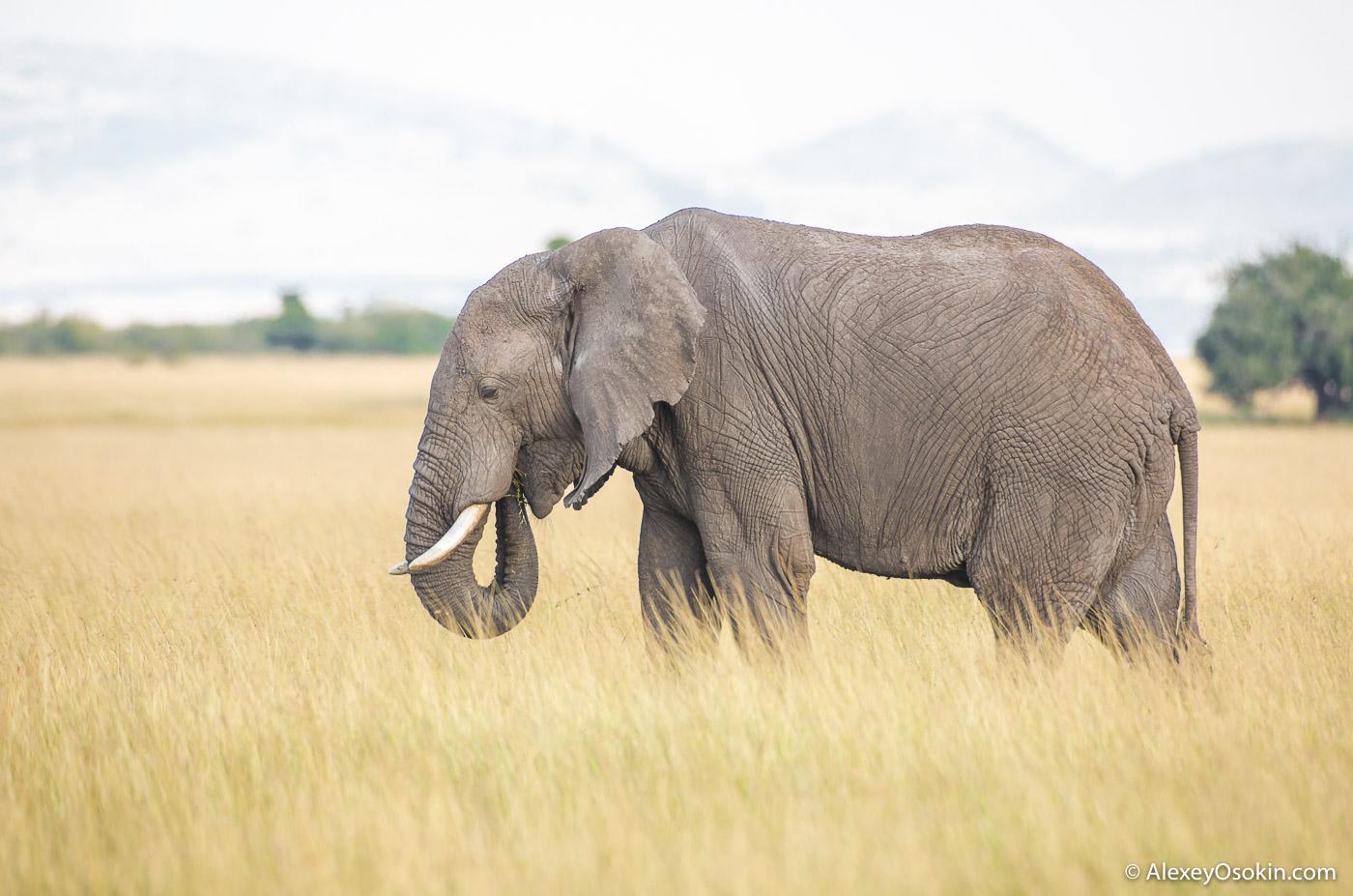 kenya_animals_ao_3-11.jpg