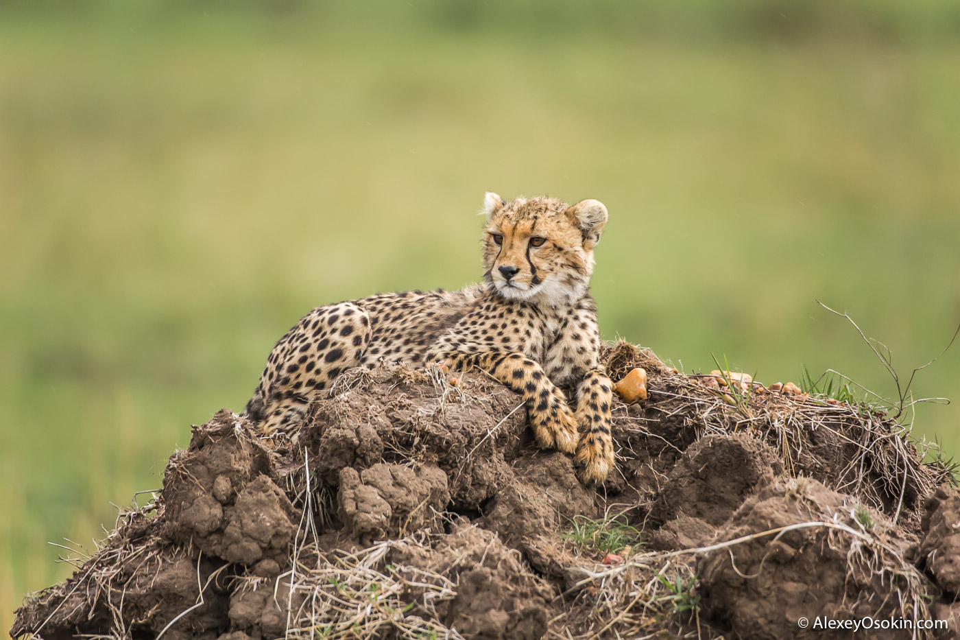 Imani and cubs, oct.2015_ao-70.jpg
