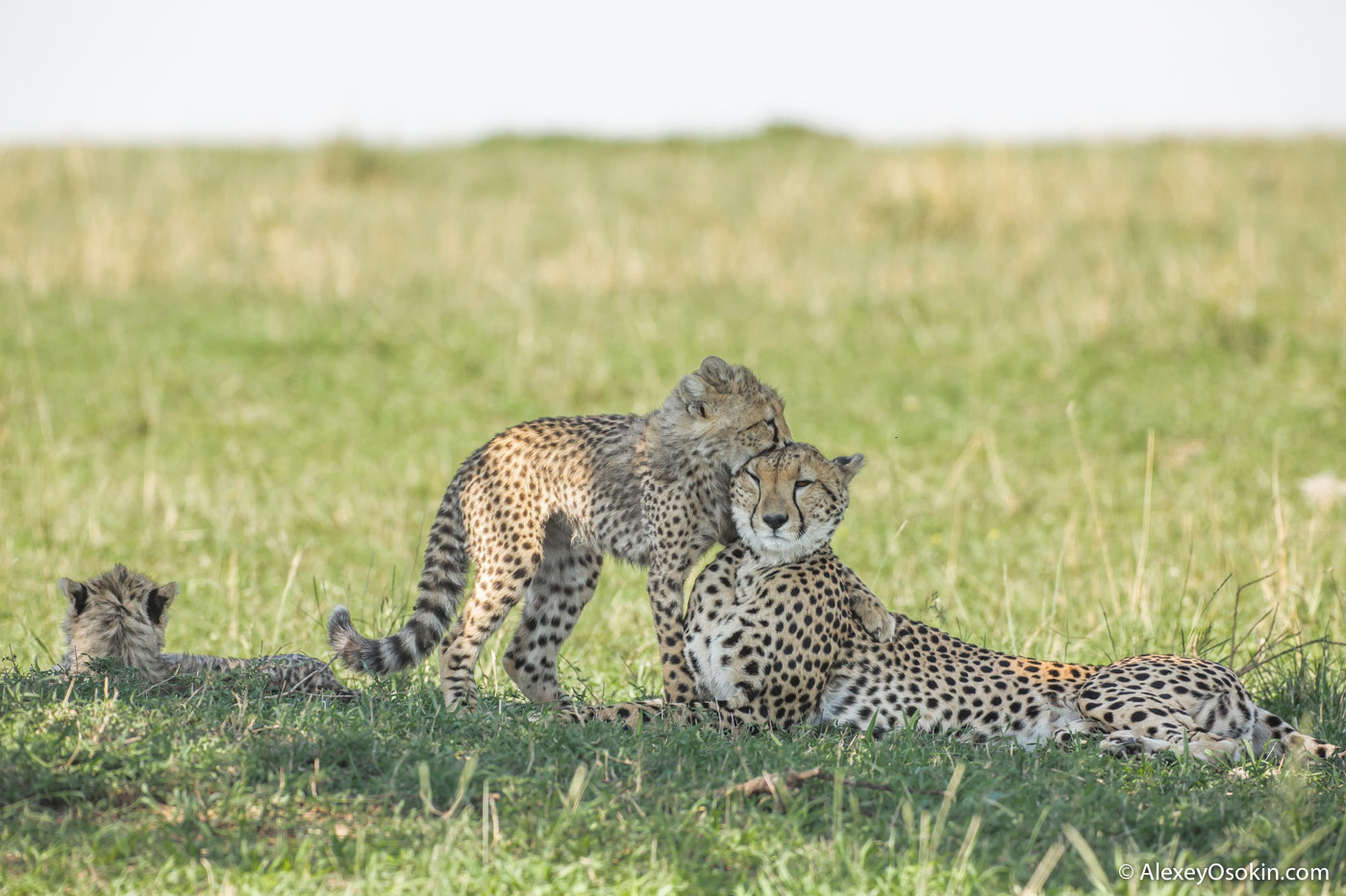 Imani and cubs bad light, nov.2015_blog--32.jpg