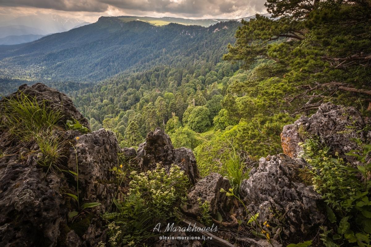 плато, Лаго-Наки, Кавказ, красивые места, маршрут