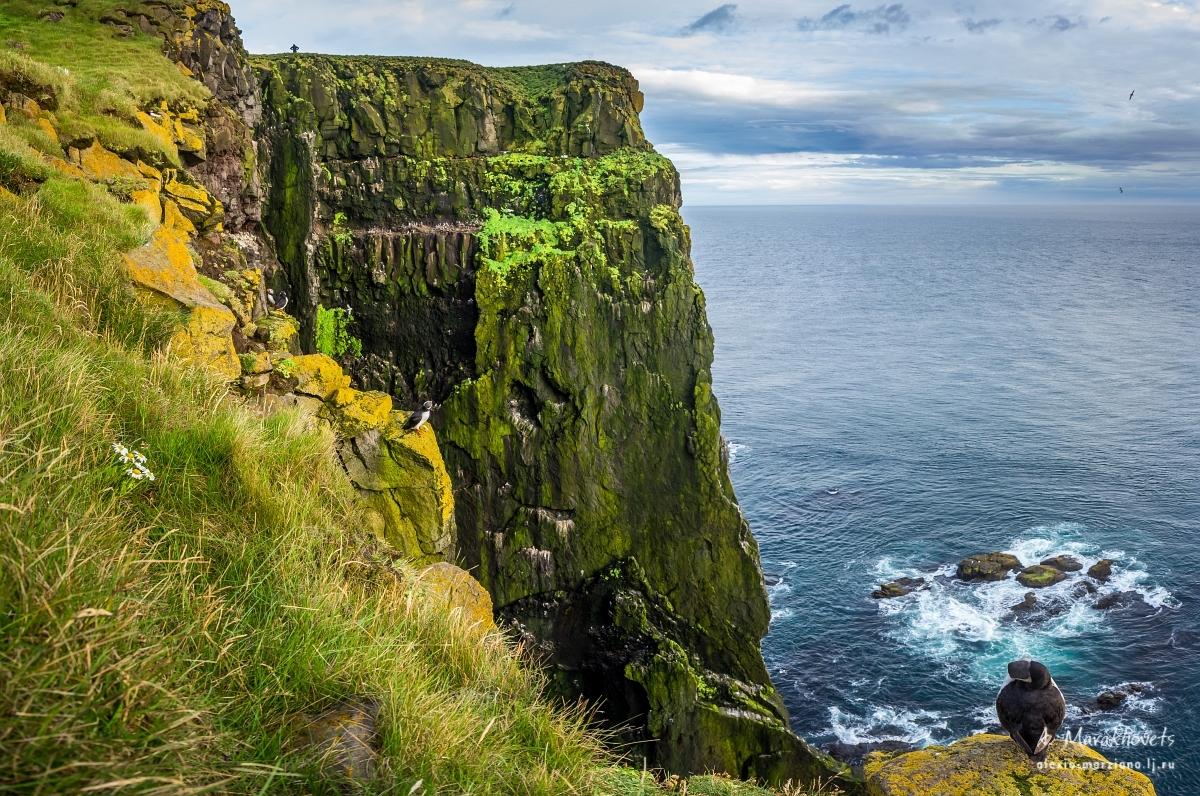 Исландия, тупики, Iceland, puffins