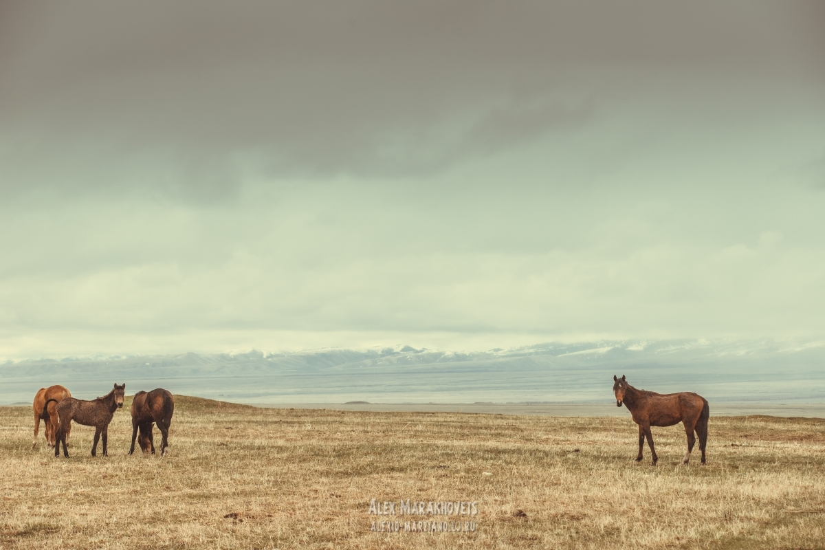 киргизия, иссык-куль, граница, каракол