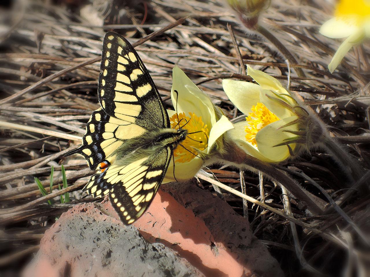 Весна. Бабочка. Подснежник.