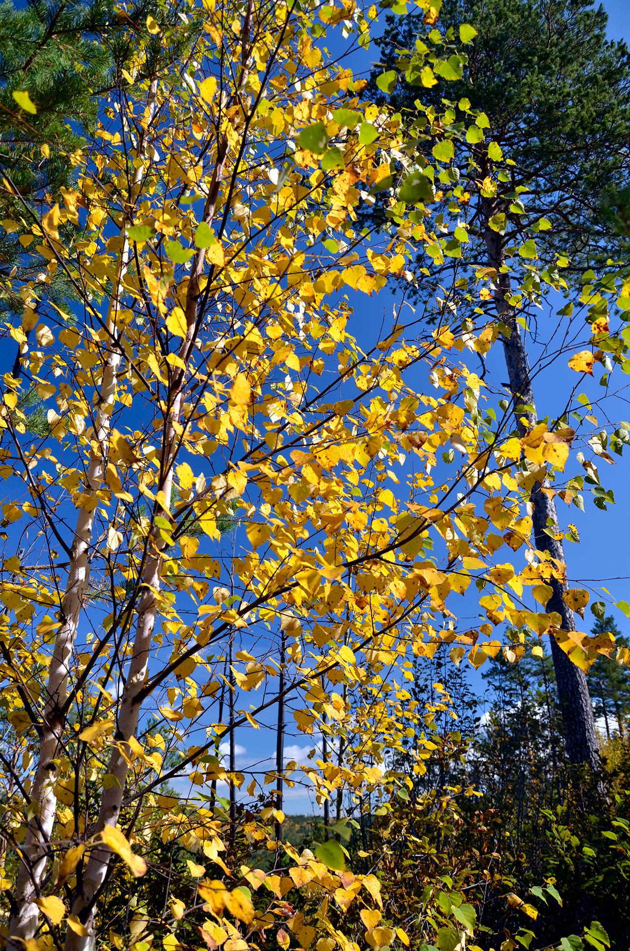 Сквозь листья