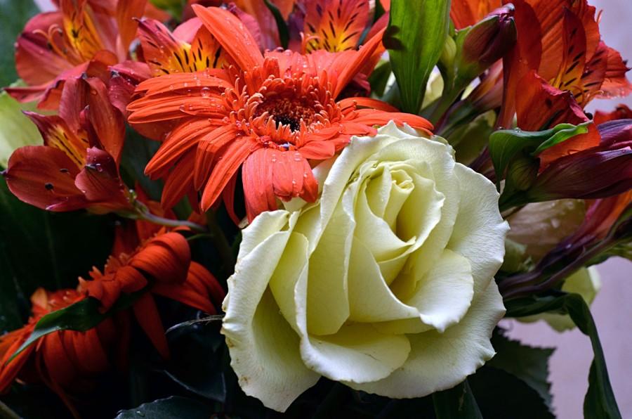 Роза и гербера