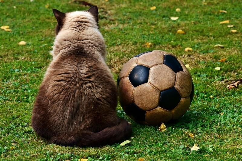 Кому футбол, а кому убытки...